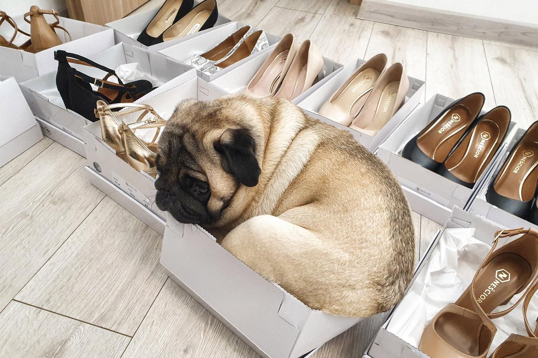 Sklep internetowy ejka! modne buty damskie na każdą okazję